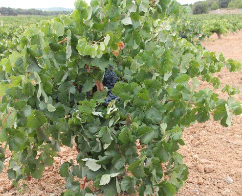 Bodega Vinos y Sabores ecológicos II